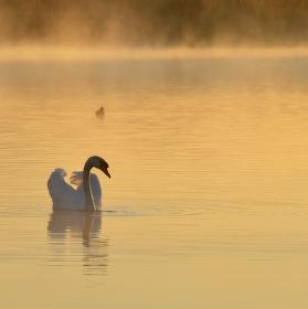 další krásný ráno