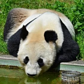 Po bambusu vyprahne