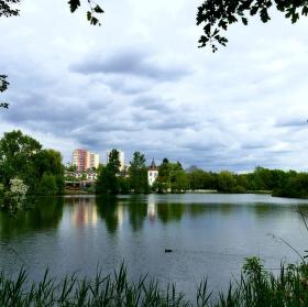 Hamerský rybník
