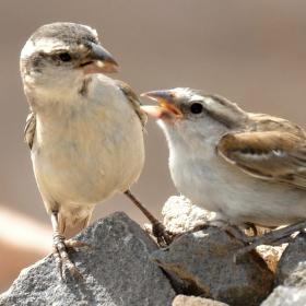 Pan a paní vrabcovi