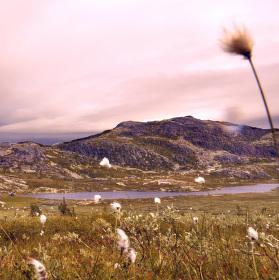 Nórska krása