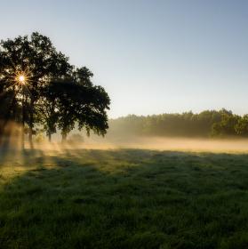 Stromová koupel v ranním slunci