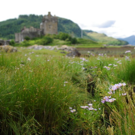 Elijah Donan castle