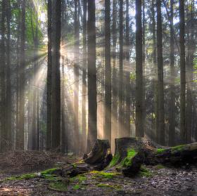 ...ráno v lese