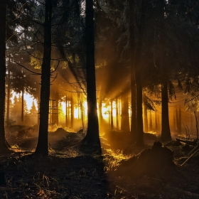 mysterious forest...