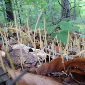 Půda lesa