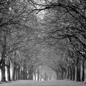 V objetí stromů