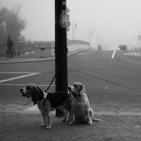 Čekající kamarádi