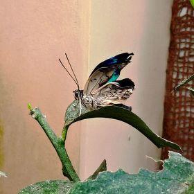 Motýlek 10