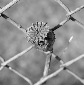 Uvězněná