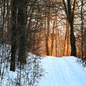 cesta za zimním světlem