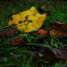 ....jedna podzimní....