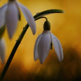 Vítej, jaro!