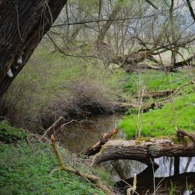 S Nikonem v lužním lese