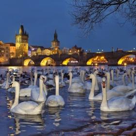 Večer u Vltavy