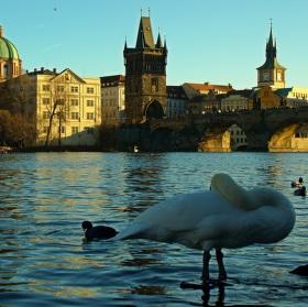 Nuda v Praze