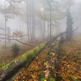 V beskydském pralese