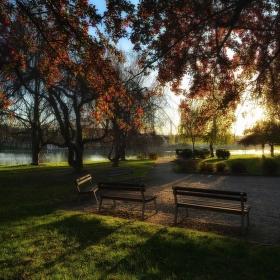 Světlo v parku ...
