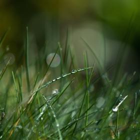 Korálky v trávě