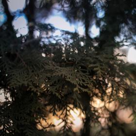 Západ slunce zpoza stromů