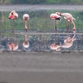 Plameňáci na kráterovém jezeru