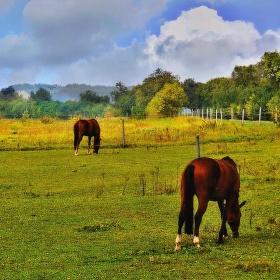 U koní ...