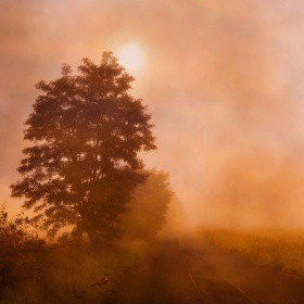 Krajina mlhy