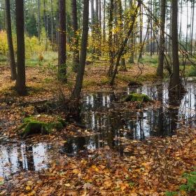 lesní bažinka...
