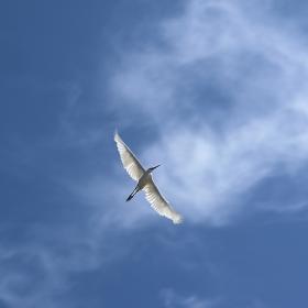 Volný jako pták