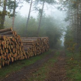 V mlhavém ránu