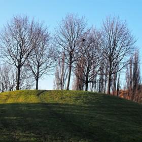 Stromy v parku - začne zima