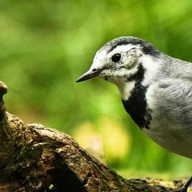 Ptáček z pralesa