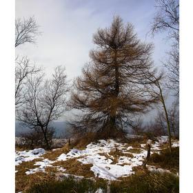 ...strom...