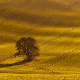Začátek jara v polích Moravského Toskánska