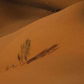 Rúb Al Chálí