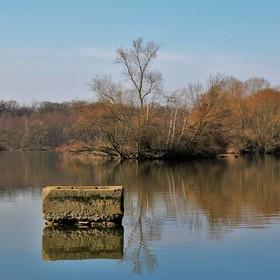 Přírodní rezervace Kotvice