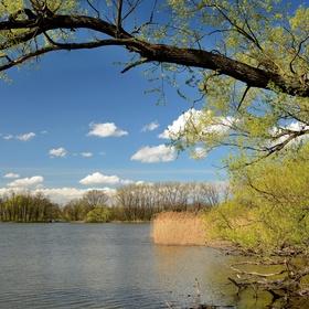 Jaro na rybníku Nová Louka