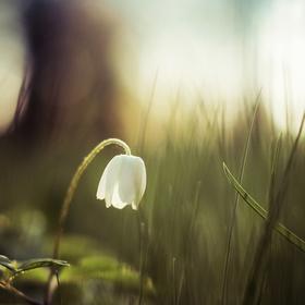 Jarní nálada