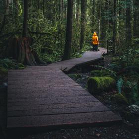 Chytni les