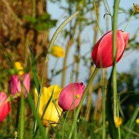 Jarní okouzlení
