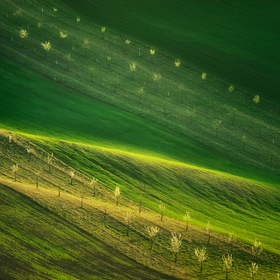 Moravské línie