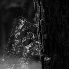 Chodím po bytě a smetám pavučiny,možná v nich hledám víru i Tvoje viny...Pořád jsem to já se vztyčenou hlavou,zářící nad proměnou...