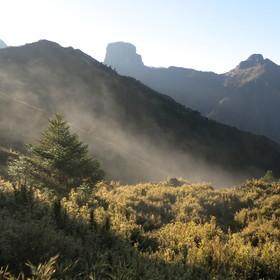 Ranní mlha v parku Sheipa