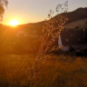 Louka při západu slunce