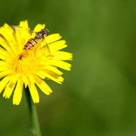 Na květu