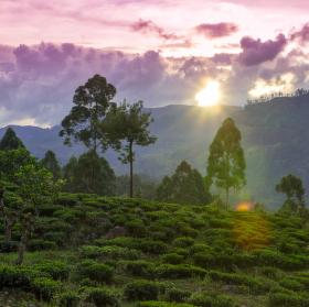 Srí Lanka - čajové plantáže