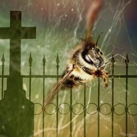 Včelí příběh