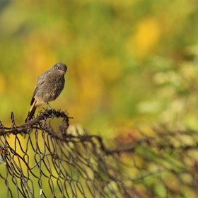 zprohýbaný plot