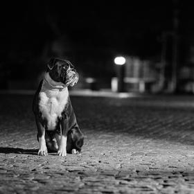 Půlnoční modelka