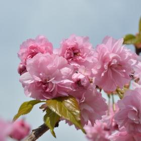 vítá nás jaro